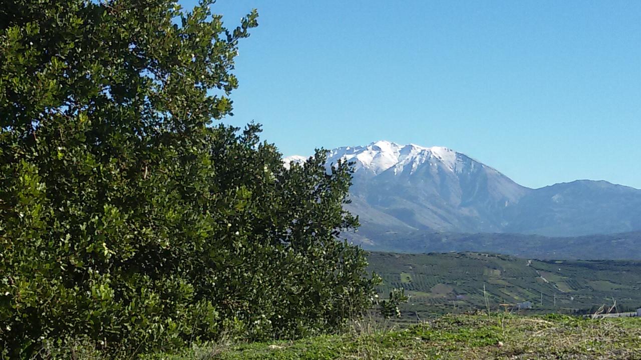 Olivenhain in Kreta - Breg Ausblick